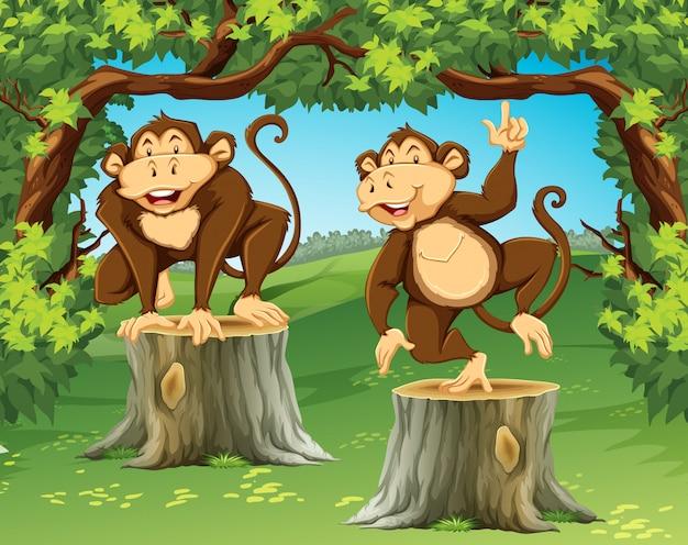 ジャングルの中で2匹のサル