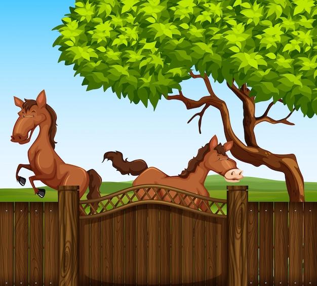 フィールドに2つの茶色の馬