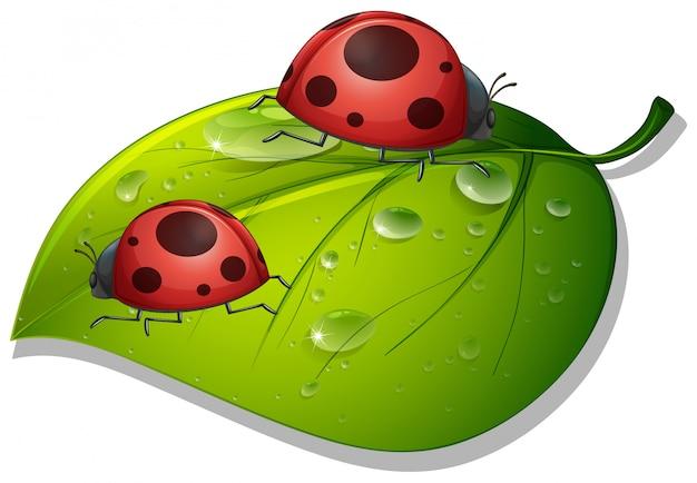 白地に緑の葉の上の2つのてんとう虫