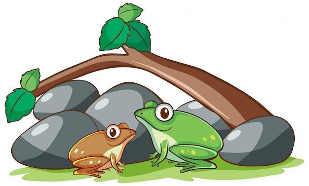 Изолированная рука нарисованная 2 лягушек под ветвью