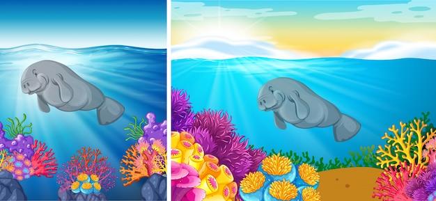 海の下で泳ぐマナティーの2つの場面