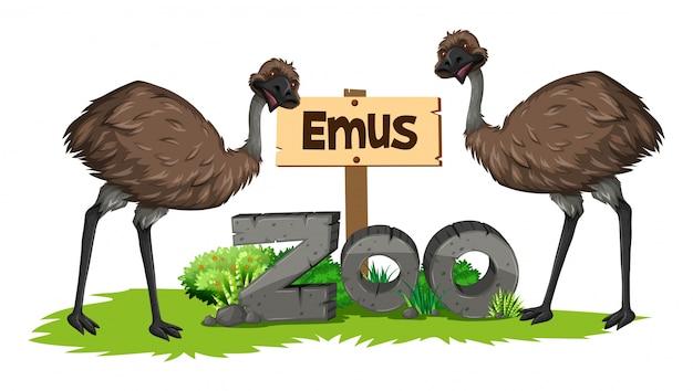 動物園の2つのエミュ