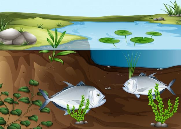 池の中で泳ぐ2匹の魚