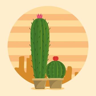 砂漠の2つのサボテンのジューシーなポット