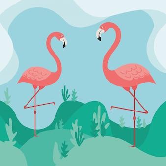 自然の中で2つのフラミンゴ