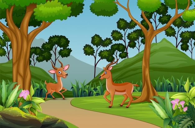 ジャングルの中で遊ぶかわいい2ガゼル