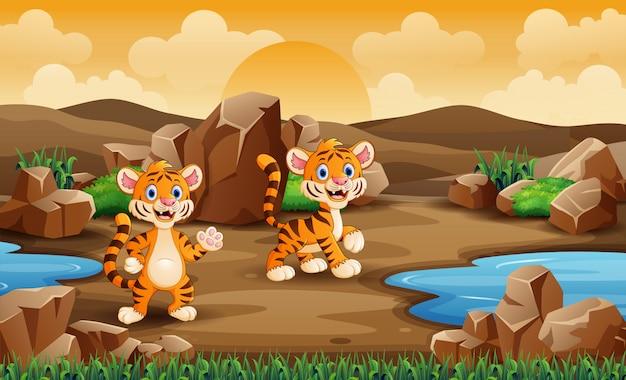 砂漠の2つの赤ちゃんトラ