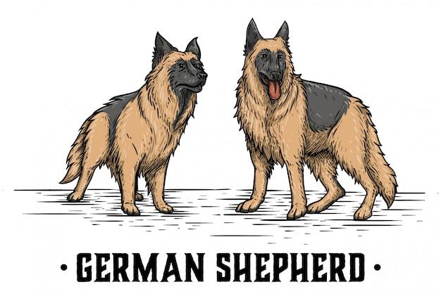 2つのジャーマン・シェパード