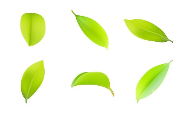 3 dの現実的な緑の葉の春葉コレクションの新しいセット。
