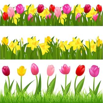チューリップと水仙からの3つの花の境界線、白い背景で隔離、