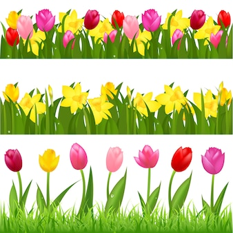 3 flower borders from tulips and narcissuses, isolated on white background,