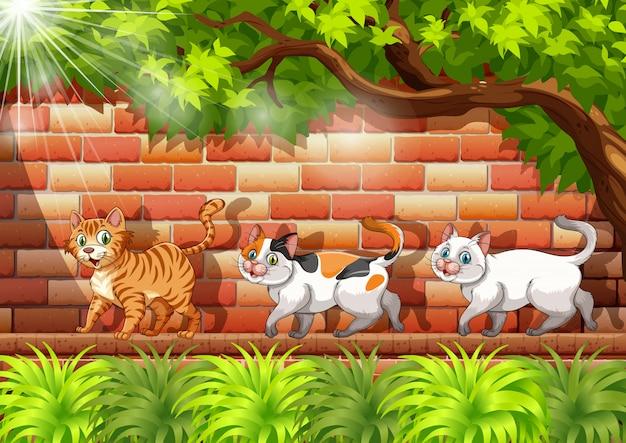 壁の上を歩く3匹の猫
