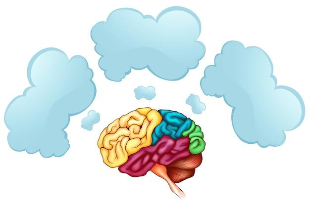 人間の脳と3つの泡