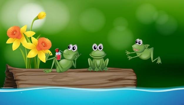 ログに3つの緑のカエル