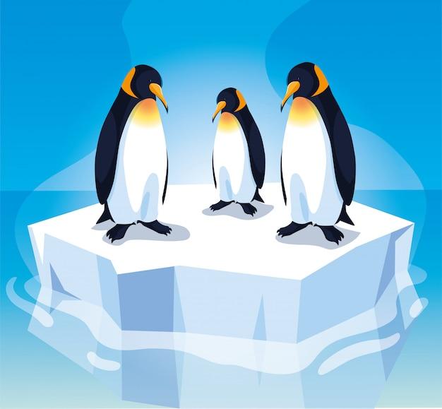 漂流する流氷上の3つのペンギン