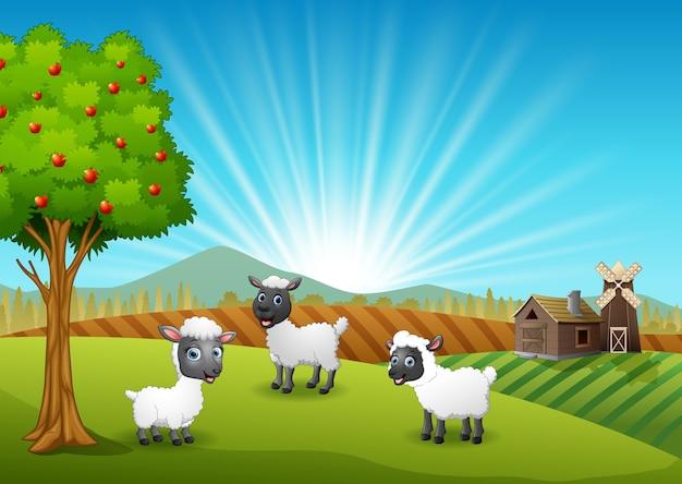 ファームの背景で幸せな3羊
