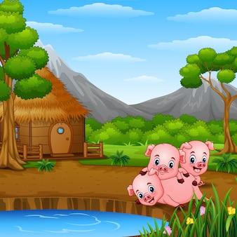 3匹の小さな豚が一緒に遊んでいる