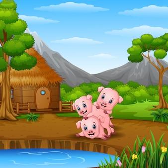 3匹の小さな豚が湖畔で遊んでいる
