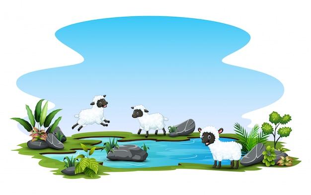 池で遊ぶ3つの羊