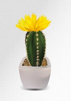 3d realistic cactus with yellow flower.