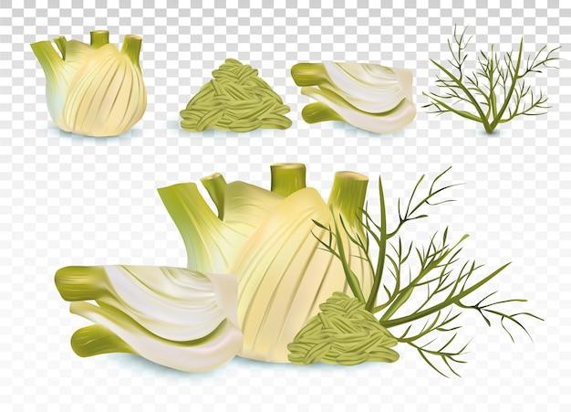 3d реалистичный фенхель с зелеными листьями и семенами.