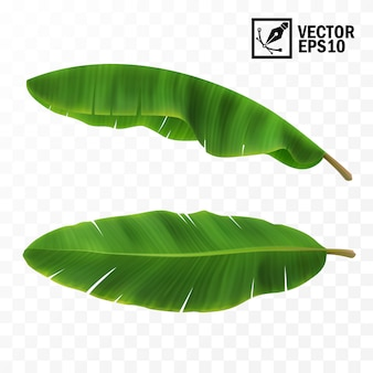 3d realistic   green fresh leaves with banana or palm trees, top view, side view