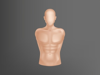 3d realistic human body. Man torso with muscles, athlete equipment for training.