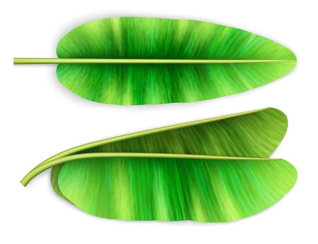 3 dのリアルなイラスト。分離されたバナナの葉