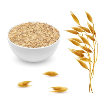 3d realistic oat ears, grains with white bowl. Detailed cereal plant