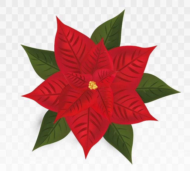 3d realistic poinsettia isolated .red christmas star.