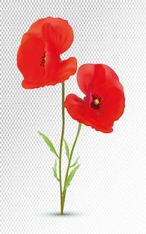 3d realistic red poppies with green leaf.