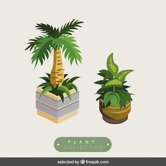3d植物はパック