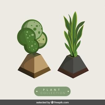 3d手描き植物がパック