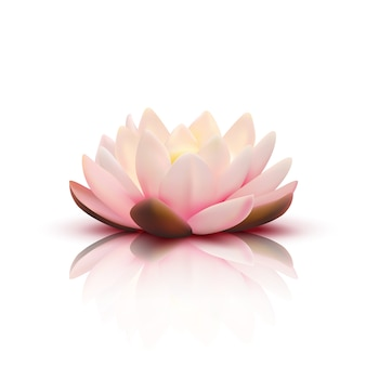 Изолированные цветок лотоса с светло-розовыми лепестками с отражением на белом фоне 3d векторная иллюстрация