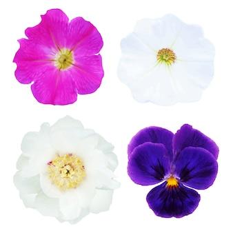 4つの花、グラデーションメッシュ、白い背景で隔離