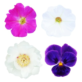 4 flowers, with gradient mesh, isolated on white background