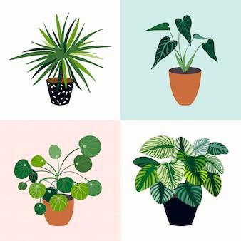 4つの熱帯植物の家の植物のコレクション