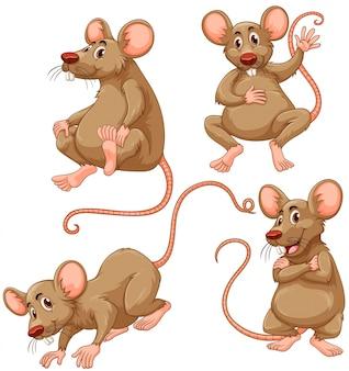 4つの茶色のマウス、白背景イラスト