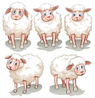 5つの白い羊