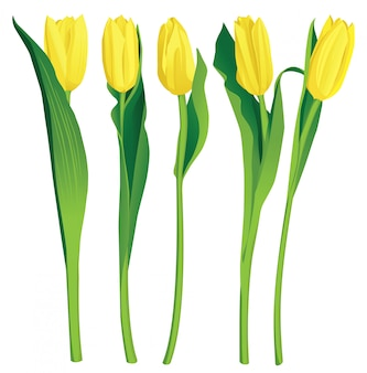 5 желтых тюльпанов