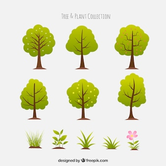 6木々や美しい植物のパック