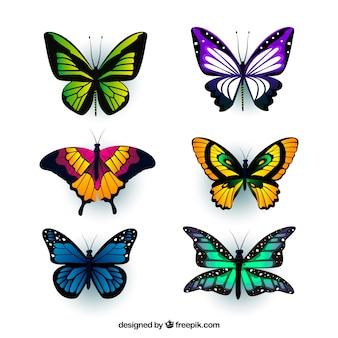 現実的なスタイルで、6色の蝶の盛り合わせ