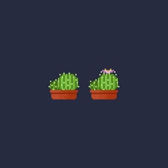 8-битный мини-кактус.