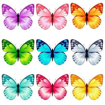 美しい蝶のコレクション、9色