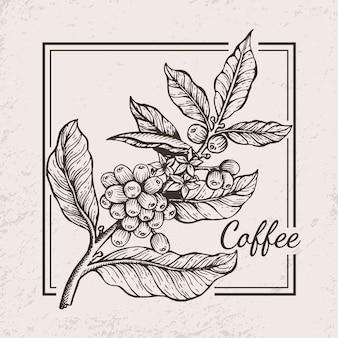 コーヒー果実小枝アイコンイラスト