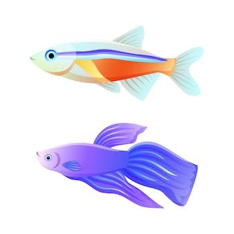 カラフルな海のネオンテトラとベタの魚