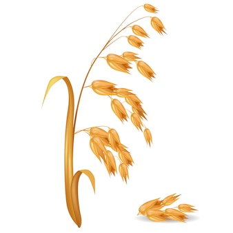 その穀物の山の近くの葉と作物の燕麦植物