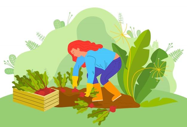 農場でビートルーツを持つ女性の農業