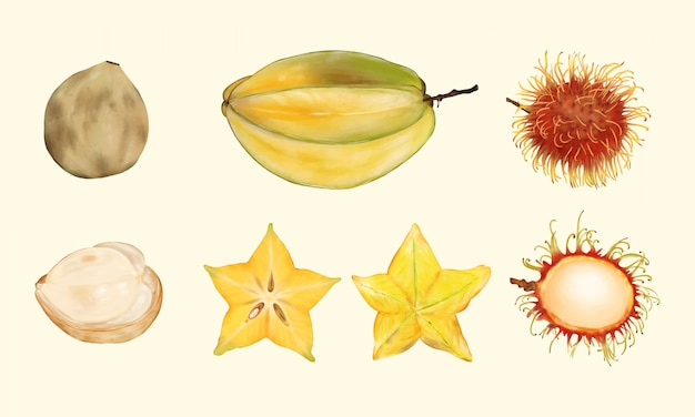 Тропические фрукты. карамбола, рамбутан, лангсат