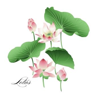 手描きの蓮の花と葉のセット。水彩。